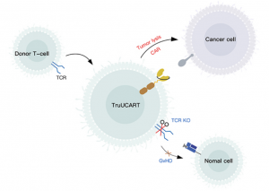 TruUCAR technology is based on lymphocytes obtained from healthy donors and modified with gene editing to avoid GvHD as well as rejection. Genetic modification protect from host versus graft (HvG) reaction, and enhances TruUCAR T cell persistence and proliferation. Image courtesy: 2020 © Gracell Biotechnologies Co., Ltd.